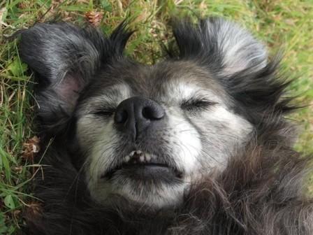 Senior dog.jpg