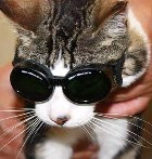 Cat wearing doggles for laser therapy