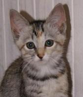 Free New Kitten Check Ups at Southern Cross Vets