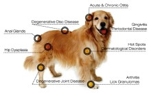 Dog conditions that laser therapy treats
