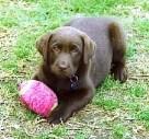 Free New Puppy Check Ups at Southern Cross