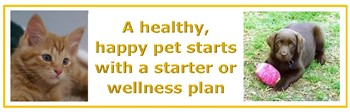 Puppy and Kitten Starter and Wellness Plans