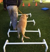 Therapeutic exercises for dogs